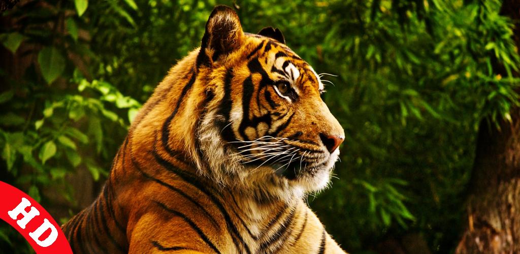 Hayvan Sesleri | Animal Sounds